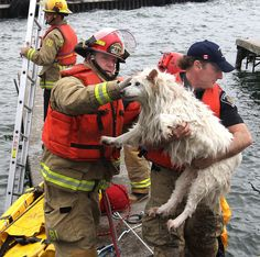 30 amazing animal rescues that were all caught on camera