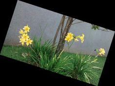 Flores no Sesc Belenzinho. Foto minha.