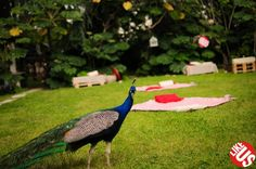 #Picnic with #peacock in #likeus_party!