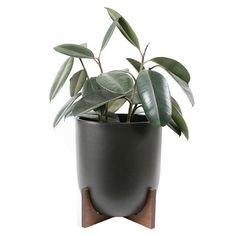 Small Case Study Ceramic Bullet Planter with Wood Stand - Black, Planted