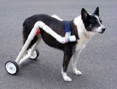 IVDD wheelchair cart features to look for