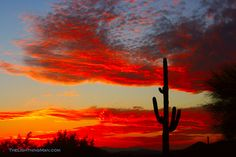 Scottsdale, Arizona sunset   Photo by: Striking Photography by Bo Insogna