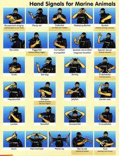 Hand signals for marine animals