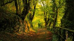 Path Through The Forest Wallpaper Picture Gallery px KB Nature & Landscape Forest Wallpaper, Fall Wallpaper, Wallpaper Pictures, Forest Path, Autumn Forest, Scenic Photography, Nature Photography, Photography Tips, Photos Panoramiques