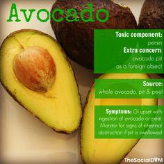 Safe Dog Food Avocado