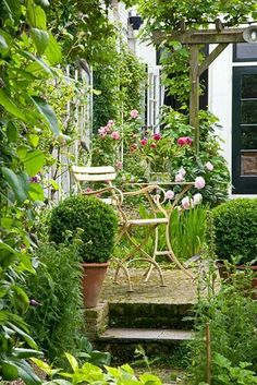 Another advantage of a small space : Go to Town in it the impact will be almost instantaneous. Raised seating area and pergola in courtyard garden with clipped Buxus standards in pots - © Elke Borkowski/GAP Photos Country Cottage Garden, Cottage Garden Plants, Cottage Garden Design, Cacti Garden, Back Gardens, Small Gardens, Outdoor Gardens, Courtyard Gardens, Courtyard Ideas