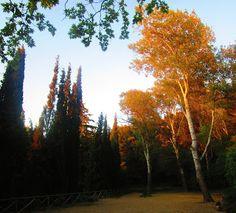 Athenslight