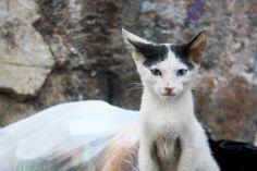 60 Gorgeous Cats With HeterochromiaIridum