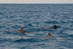 Delfino (Isola d'Elba, Italy) #Patresi, #IsoladElba, #Elba #Italy #doplhin
