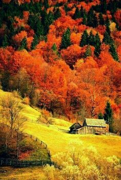 The post (notitle) autumn scenery appeared first on Trendy. Fall Pictures, Nature Pictures, Beautiful World, Beautiful Places, Beautiful Beautiful, Autumn Scenes, Autumn Aesthetic, Amazing Nature, Belle Photo