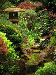 garden pond - WOW!