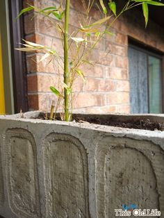 This (sorta) Old Life: DIY concrete planter