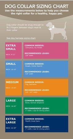 Dog collar sizing chart via petsmart.com