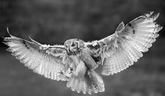 """test of black and white"" by stefano ronchi, via 500px."
