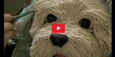 Dear, How to make a fantastic Sculpted Dog Cake ?  All detail and recipe Video;   ...