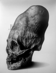 "Ancient ""Phallus Head"" alien skull.  By secretly ruling the Egyptians, their race made the best of their tragic North African desert crash."
