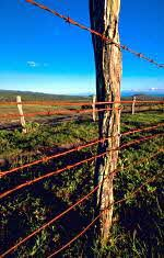 The first commercially successful barbed wire was patented in 1874 by Joseph Farwell Glidden, a DeKalb, Illinois Farmer. Barbed wire was cheap to produce and easy to put up, and kept roaming livestock out of farmer's crop fields. It was an immediate success and the beginning of the end of open range in the west