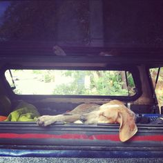 dirty, sleepy puppies on the way back from the lake. there's simply nothing better.