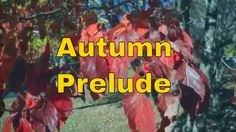 Autumn prelude Zero Project