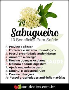 Os 15 Benefícios do Sabugueiro Para Saúde!  #Sabugueiro #Sabugueiroparaqueserve #paraqueserveSabugueiro #Sabugueirofazbempraque #Sabugueiroébom #Sabugueiroebom #remediocaseiro #natural #nutrição #alimentação #receitas #receitacaseira  #receitasrapidas #tratamentocaseiro #health #healthyrecipes #remediosnaturales #remedioscaseros #dicasdesaude #bemestar #saúde #healthyfood #dicasdebeleza #dicasdesaúde #mulher #beleza Low Carb Recipes, Cooking Recipes, Healthy Recipes, Home Remedies, Natural Remedies, Health Tips, Health And Wellness, Healthy Mind And Body, Medicinal Plants