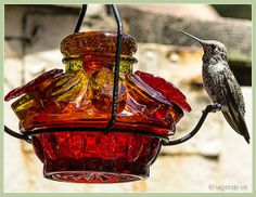 Hummingbird Nectar Recipe Vegan Gluten Free, Dairy Free, Nectar Recipe, Hummingbird Nectar, Vegan Treats, Cooking Food, No Cook Meals, Allrecipes, Creative Ideas