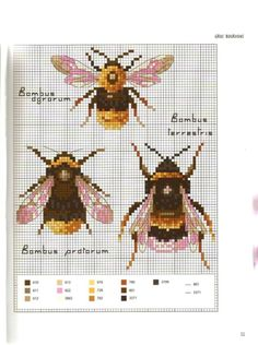 Gallery.ru / Photo # 13 - MARABOUT Insects - tatasha Insects cross stitch scientific diagram bees bumblebee