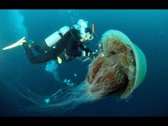World's Deadliest Jellyfish (Full Documentary) | Pin now, enjoy later.