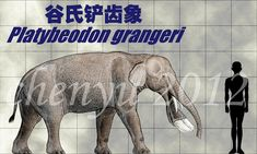 Platybeodon grangeri by sinammonite on DeviantArt
