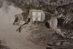 The Airedale was extensively used in World War I to carry messages to soldiers behind enemy lines and transport mail. They were also used by the Red Cross to find wounded soldiers on the battlefield.