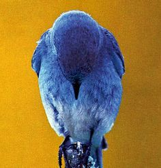 Nice photo of a Blue bird