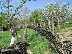 Arch, Outdoor Structures, Garden, Plants, Longbow, Garten, Arches, Gardens, Planters