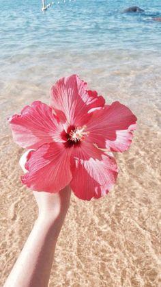 Tumblr Wallpaper, Screen Wallpaper, Wallpaper Backgrounds, Iphone Wallpaper, Tropical Vibes, Cute Wallpapers, Aesthetic Wallpapers, Flower Power, Beautiful Flowers