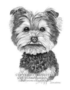 """""""Dutch Puppy"""" - Yorkie pet portrait 11"""" x 14"""" graphite drawing by Catherine Garneau. Commissioned by Joey DiMaio."""