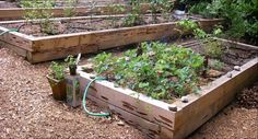 Pecky Cedar Garden Box