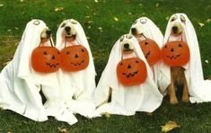 Your kids may think Halloween is fabulous and fun, but your pets may not agree. Halloween can be very scary for your pet, and there are risks, even for pets who Pet Halloween Costumes, Pet Costumes, Happy Halloween, Funny Halloween, Ghost Costumes, Costume Ideas, Halloween Party, Costume Contest, Halloween Ghosts
