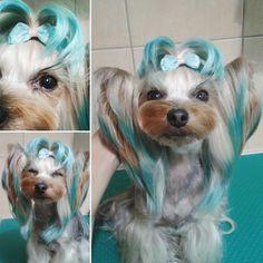 -repinned- Creative dog grooming Yorkie