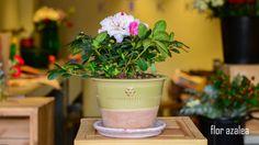 #plantas #macetas #barro #artesanal #mx #floreria #azalea