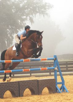 """""""A horse is the projection of peoples' dreams about themselves - strong, powerful, beautiful - and it has the capability of giving us escape from our mundane existence."""" // morning jumping 