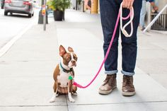 Make your own stylish DIY Dip Dyed Rope Leash with this fantastic DIY kit and tutorial by Brit + Co and Dog Milk.