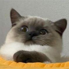 Pretty Animals, Pretty Cats, Cute Funny Animals, Cute Baby Animals, Cute Cat Memes, Cute Love Memes, Cute Baby Cats, Cute Babies, Creepy Stuffed Animals