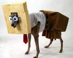 Mr. Bobbys World: sponge dog square pants