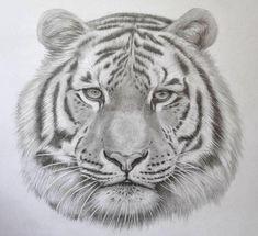 Výsledek obrázku pro how to draw tiger