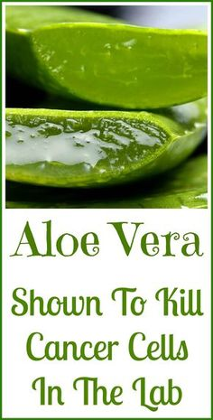 Aloe vera has been used medicinally for thousands of years. It's been shown to kill cancer cells in the lab.