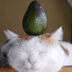 Me when I have avocado!  Dont forget to check our website! Link in bio     #avocado #food #instafood #healthyfood #foodporn #foodie #healthy #breakfast #brunch #yummy #vegan #homemade #sushi #nutrition #foodphotography #foodblogger #lunch #salad #foodgasm #cleaneating #eggs #weekend #foodstagram #foodlover #veganfood #salat #love #billieeilish #weightloss #plantbased Avocado Food, Homemade Sushi, Website Link, Vegan Recipes, Food Porn, Brunch, Forget, Eggs, Nutrition