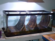 Does this work read and say what you think! Saltwater Aquarium Setup, Aquarium Algae, Biotope Aquarium, Wall Aquarium, Coral Reef Aquarium, Home Aquarium, Aquarium Ideas, Saltwater Tank, Aquarium Fish Tank