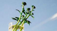 7 plantas que deixam Diy Herb Garden, Interior Plants, Stevia, Indoor Plants, Minerals, Herbalism, Herbs, House Styles, Green
