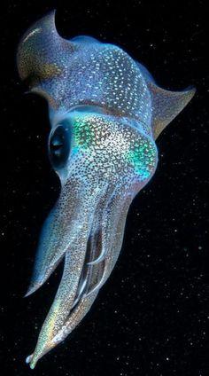 Reef squid—Okinawa, Japan—by Cameron Knudsen—National Geographic Beautiful Sea Creatures, Deep Sea Creatures, Animals Beautiful, Underwater Creatures, Underwater Life, Fauna Marina, Water Animals, Deep Sea Animals, Wale
