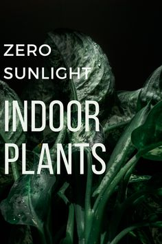 Indoor Gardening, Indoor Plants, Gardening Tips, Lower Lights, All Of The Lights, Prayer Plant, House Plant Care, Perfect Plants, Light House