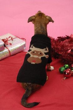 Puchi - Reindeer dog Jumper – The Dog Demands Christmas Goodies, Christmas Treats, Christmas Ornaments, Santa Outfit, Dog Jumpers, After Christmas, Cute Dogs, Christmas Stockings