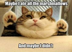This cat would be me...